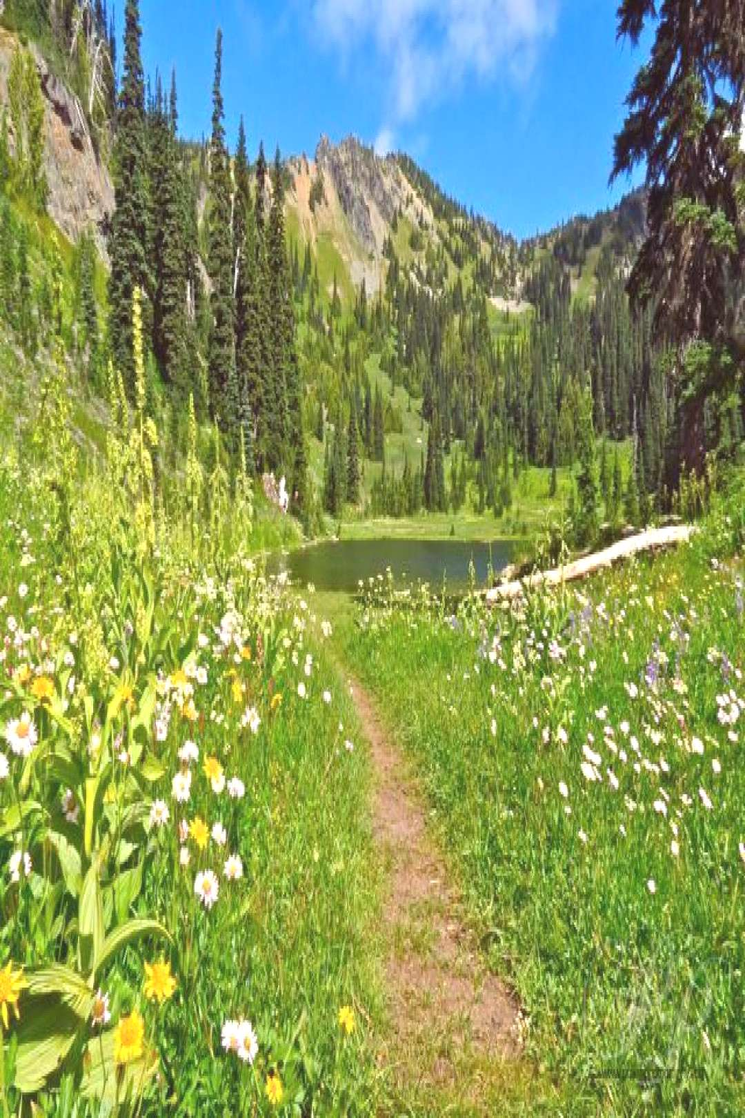 Hunting   hiking the pacific crest trail, hiking pct pacific crest trail, pacific crest trail pla